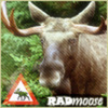radmoose